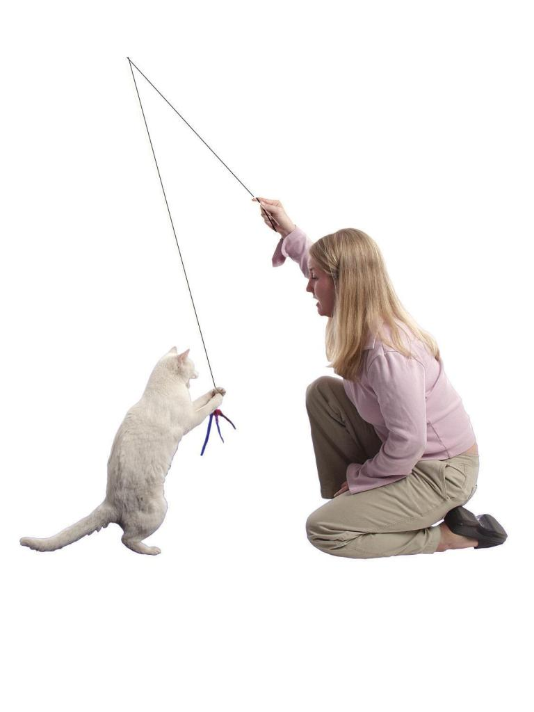Lady with a feather-wand playing with a white cat