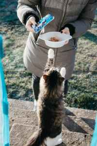 outdoor cat being fed